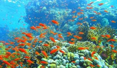 Andaman Islands activities