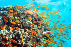 scuba diving in andaman